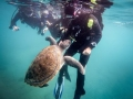 PADI Divemaster internship - Diving in Tenerife